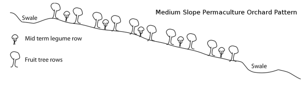 slopeorchard2